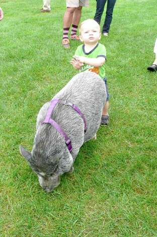 Chase Larsen pets Earl, a Vietnamese potbelly pig, at Go Wild! Photo: Anne W. Semmes