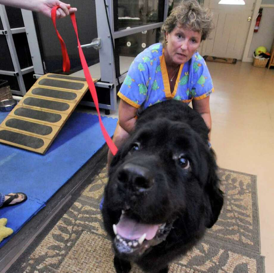 Gail Henderson gives canine rehab to Tug in her New Milford business, Paws and Paddle Saturday, Sept. 10, 2011. Photo: Michael Duffy