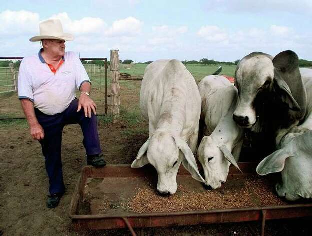 Bum Phillips looks over some of his Brahma bulls on his ranch Friday, July 10, 1998, in Goliad, Texas. Phillips, who left coaching the New Orleans Saints in 1985, now lives on his 250-acre South Texas ranch. (AP Photo/David J. Phillip) Photo: DAVID J. PHILLIP, STF / Beaumont