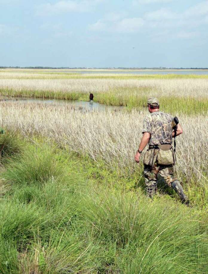 MUSHING FOR MARSH HENS  - David Tyte of Houston and Toby, a chocolate Lab, work a Matagorda County saltmarsh for rails, one of the least-pursued game birds in the state. Photo: Shanhnon Tompkins