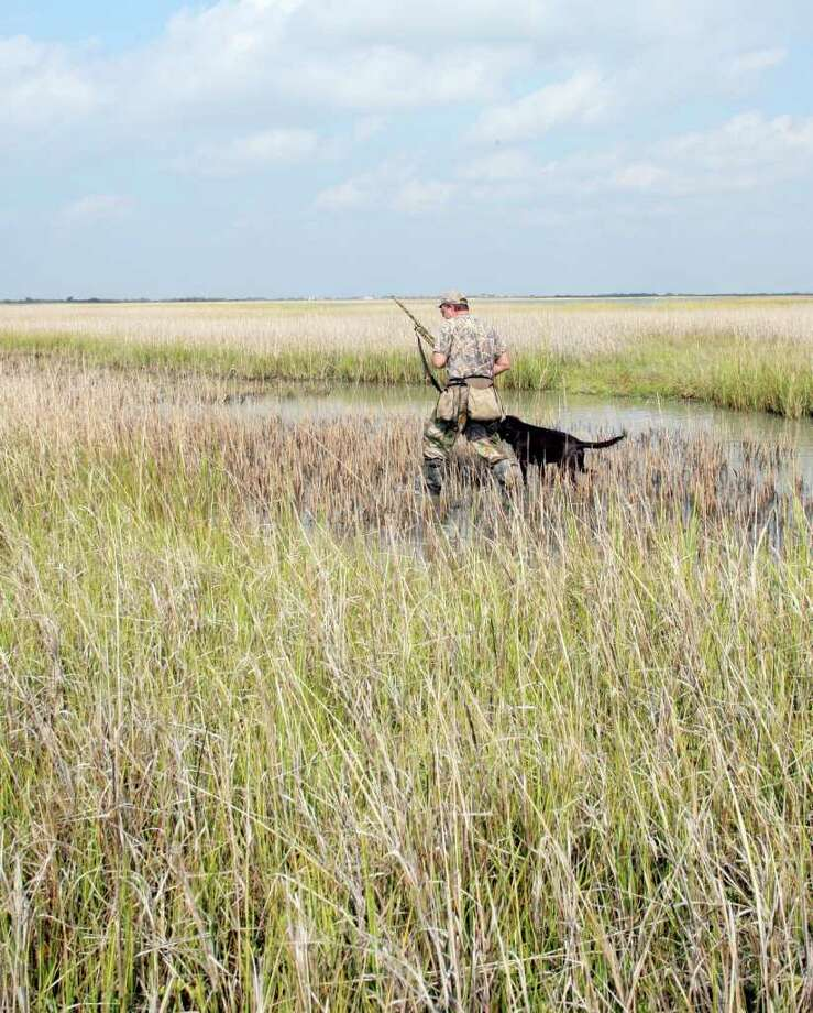 MUSHING FOR MARSH HENS  - David Tyte of Houston and Toby, a chocolate Lab, work a Matagorda County saltmarsh for rails, one of the least-pursued game birds in the state. Photo: Shannon Tompkins