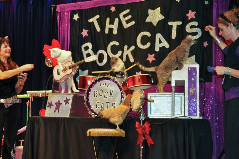 COURTESY PHOTO TOP DOGS, ER, CATS: The Chicago-based Acro-Cats - Buggles, Fiji, Pudge, Oz and Itty - perform with a chicken. The feline group will perform today through Sunday. Photo: Courtesy Photo