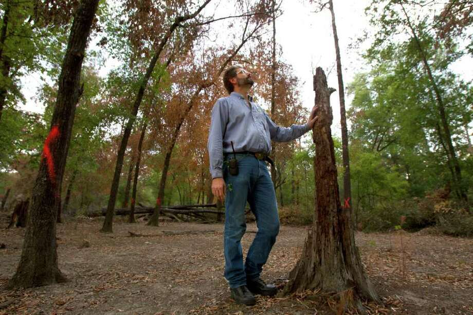"Joe Blanton is the director of conservation at the Houston Arboretum & Nature Center, which has lost a fourth of its trees to the record-breaking drought this year. The arboretum's staff has marked those that need to be removed. ""I'm saddened by the loss of all the trees,"" Blanton said. Photo: Cody Duty / © 2011 Houston Chronicle"