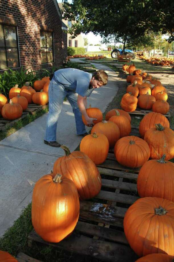 Matthew Cowley age 17, puts pumkins out at St. Andrews in Pearland. Photo: Jimmy Loyd / freelance
