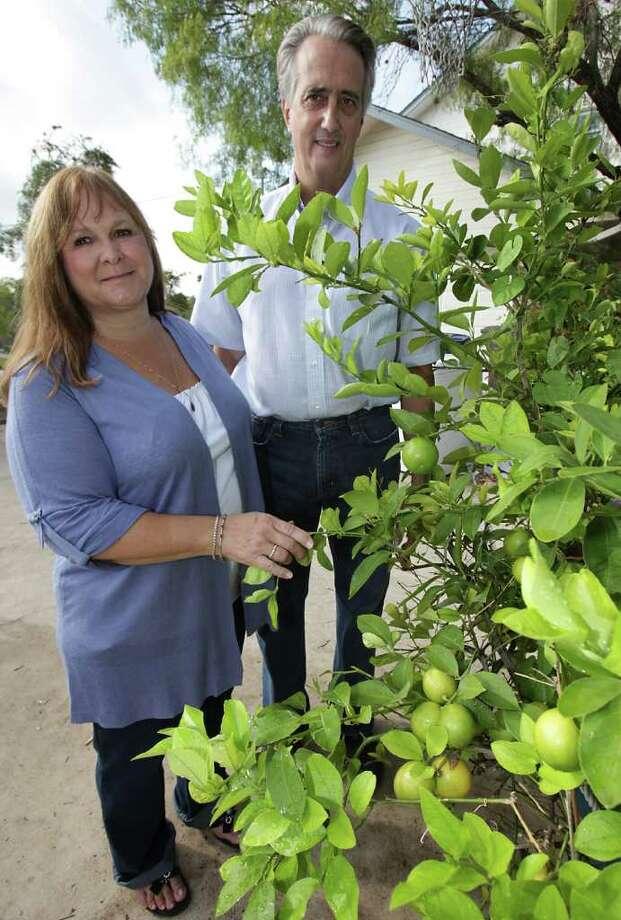 Gloria and Bart Kelly grow a small Meyer lemon tree in their backyard. Photo: BOB OWEN, SAN ANTONIO EXPRESS-NEWS / rowen@express-news.net