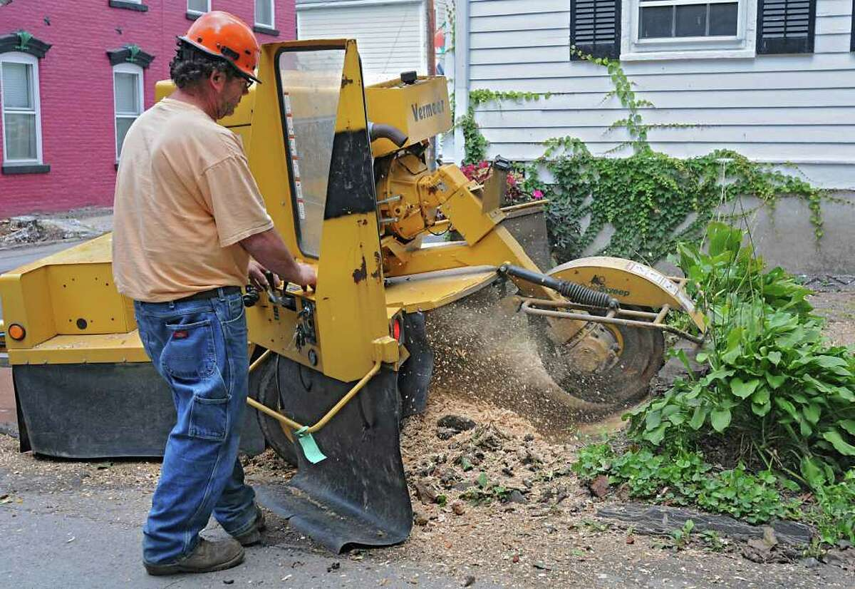 City of Schenectady worker Joe Vitale grinds down a tree stump on Washington Ave. in the Stockade section of Schenectady, N.Y. Tuesday, Oct. 4, 2011. (Lori Van Buren / Times Union)