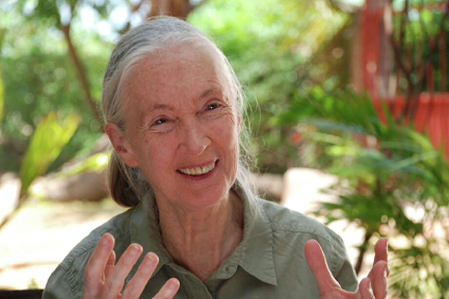 "Jane Goodall in ""Jane's Journey."""