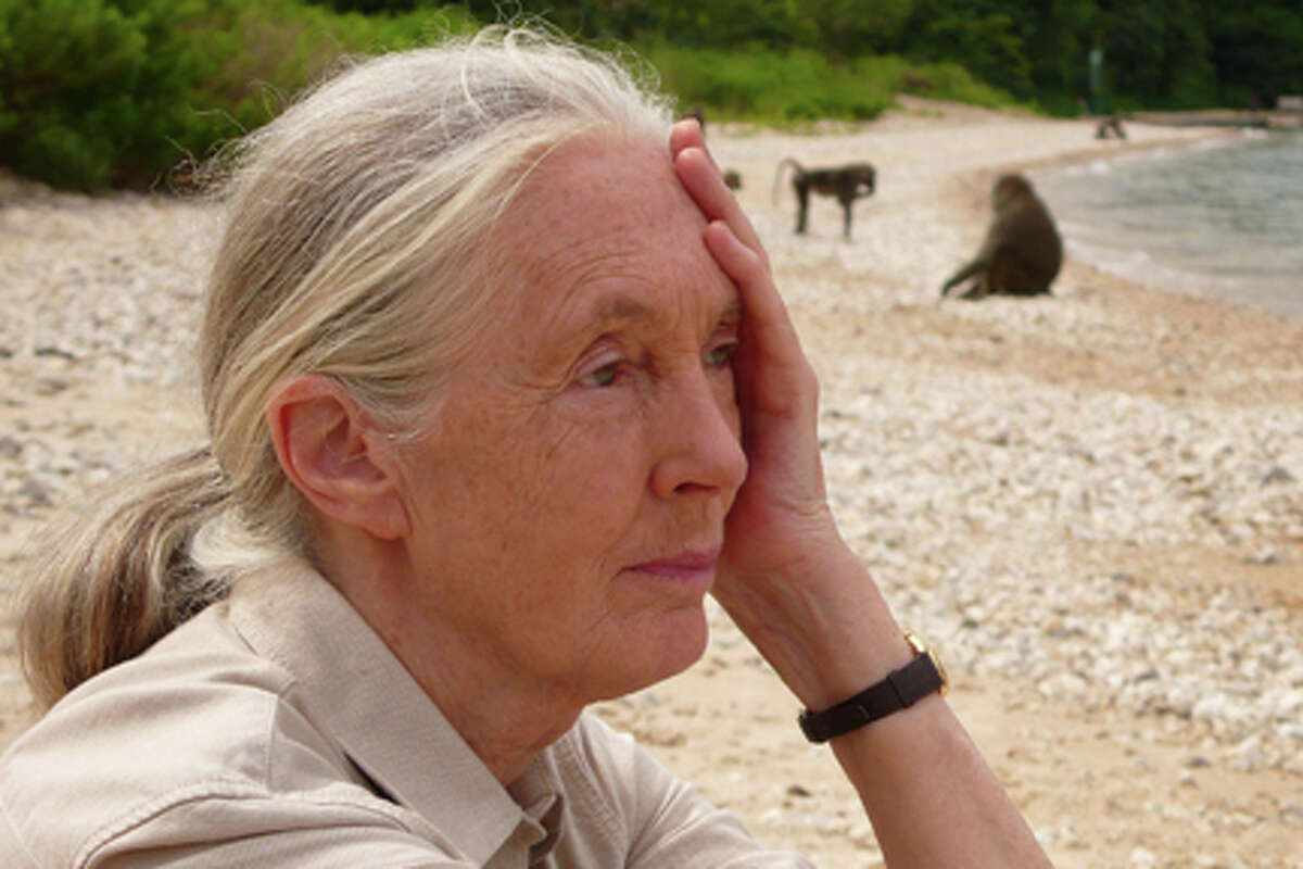 Jane Goodall in