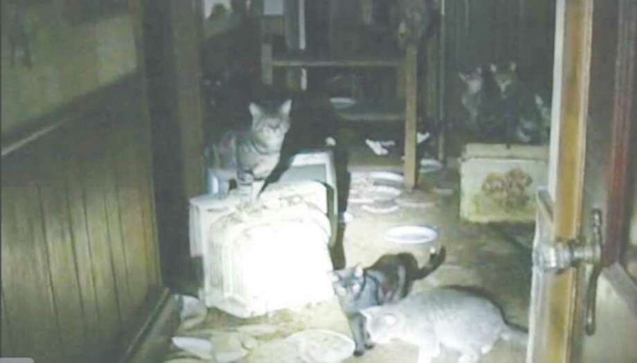 screen grab of cats removed from Rotterdam home.