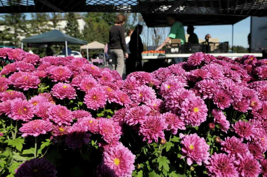 Mums from George's Market out of Latham are seen on a rack for sale on the final day of the CDPHP Farmers? Market located at 500 Patroon Creek Blvd. on Thursday, Oct. 6, 2011.  The farmer's market that is open to the public is held from the end of May until early October.  (Paul Buckowski / Times Union) Photo: Paul Buckowski / 00014891A