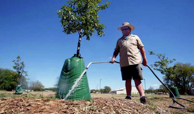 San Antonio Parks and Recreation Department employee Gary Boubel fills water bags Tuesday, Oct. 4, 2011 in Golden Park. Boubel says each bag holds about 20 gallons and waters the tree over a four- to eight-hour period. Photo: William Luther/wluther@express-news.net / 2011 SAN ANTONIO EXPRESS-NEWS