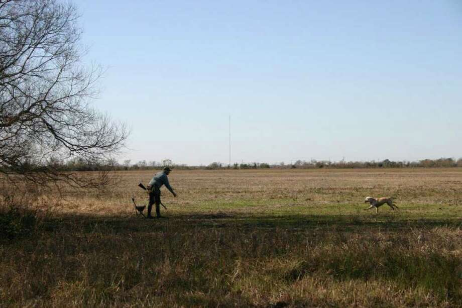 JOE DOGGETT: FOR THE CHRONICLE DOG DAYS: Near or far, a trained retriever to recover long falls is an asset for the dove hunter. Photo: Joe Doggett