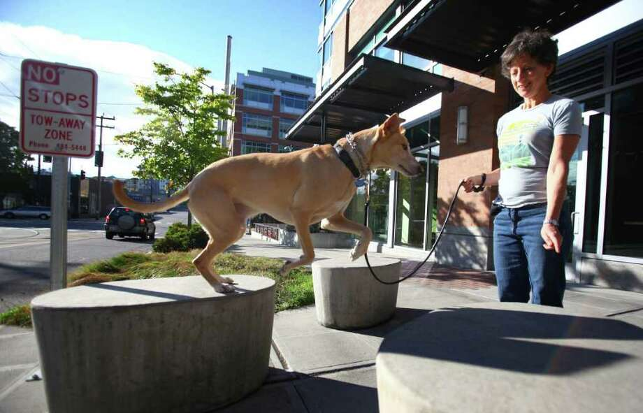 Loretta Vosk works on agility training with her dog King as they go for a walk in their South Lake Union neighborhood on Saturday, October 8, 2011. Vosk is advocating for a dog park in the neighborhood. Photo: JOSHUA TRUJILLO / SEATTLEPI.COM