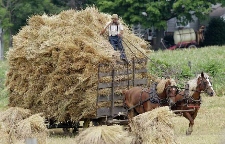 FILE - In this July 15, 2011 file photo, an Amish man rides on top of a hay wagon near Middlefield, Ohio. Jefferson County, Ohio Sheriff Fred Abdalla says men and sometimes women from a group of families disavowed by mainstream Amish have terrorized a half-dozen or more fellow Amish, cutting off their hair and beards. Abdalla said Thursday, Oct. 6, 2011 that his deputies have been hampered by the reluctance of Amish to press charges.  (AP Photo/Tony Dejak, File) Photo: Tony Dejak / AP2011
