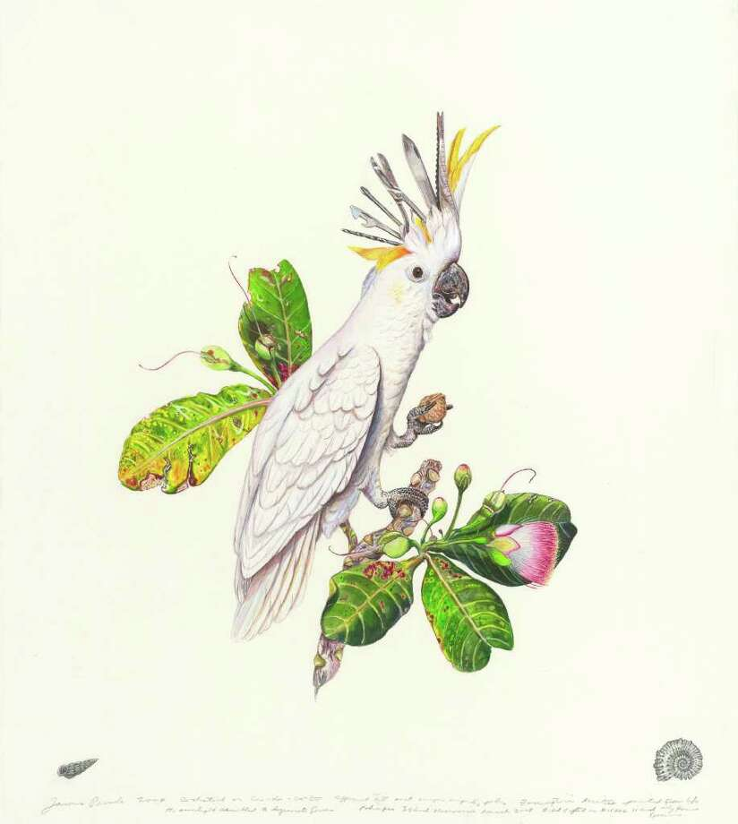 """""""Cockatool,"""" a watercolor by James Prosek, features a cockatiel whose crest is made up of tools from a Swiss Army knife. It's included in """"James Prosek: Un-Natural History"""" at the Bellarmine Museum of Art at Fairfield University. Photo: Contributed Photo"""