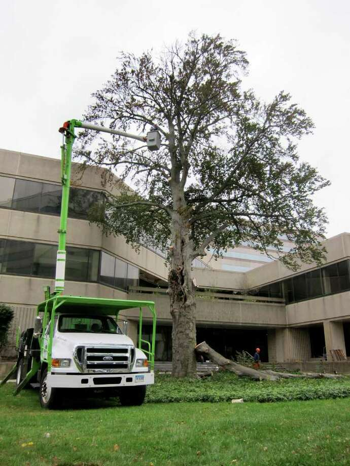 A crew from Savatree in Norwalk cuts down an approximately 200-year-old copper beech tree near the intersection of Tresser and Washington boulevardsin Stamford, Conn. on Wednesday Oct. 12, 2011. The property was once home to The Advocate and is slated to become apartments and retail space. Photo: Jon Lucas / Stamford Advocate