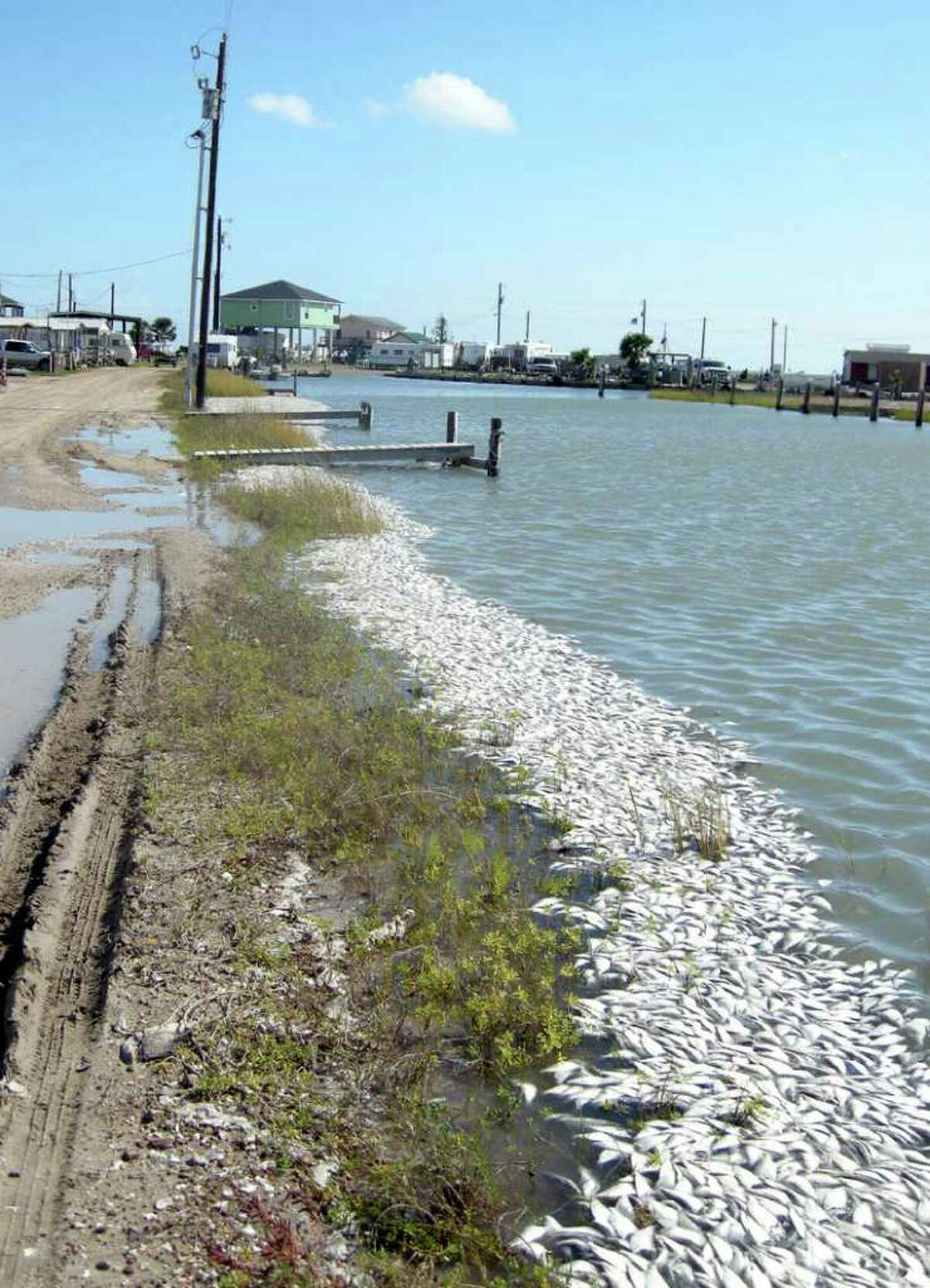 Gulf menhaden line the water along Indianola Fishing Marina. The Texas coast is experiencing the largest red tide bloom in a decade, according to Texas Park and Wildlife officials. COURTESY PHOTO