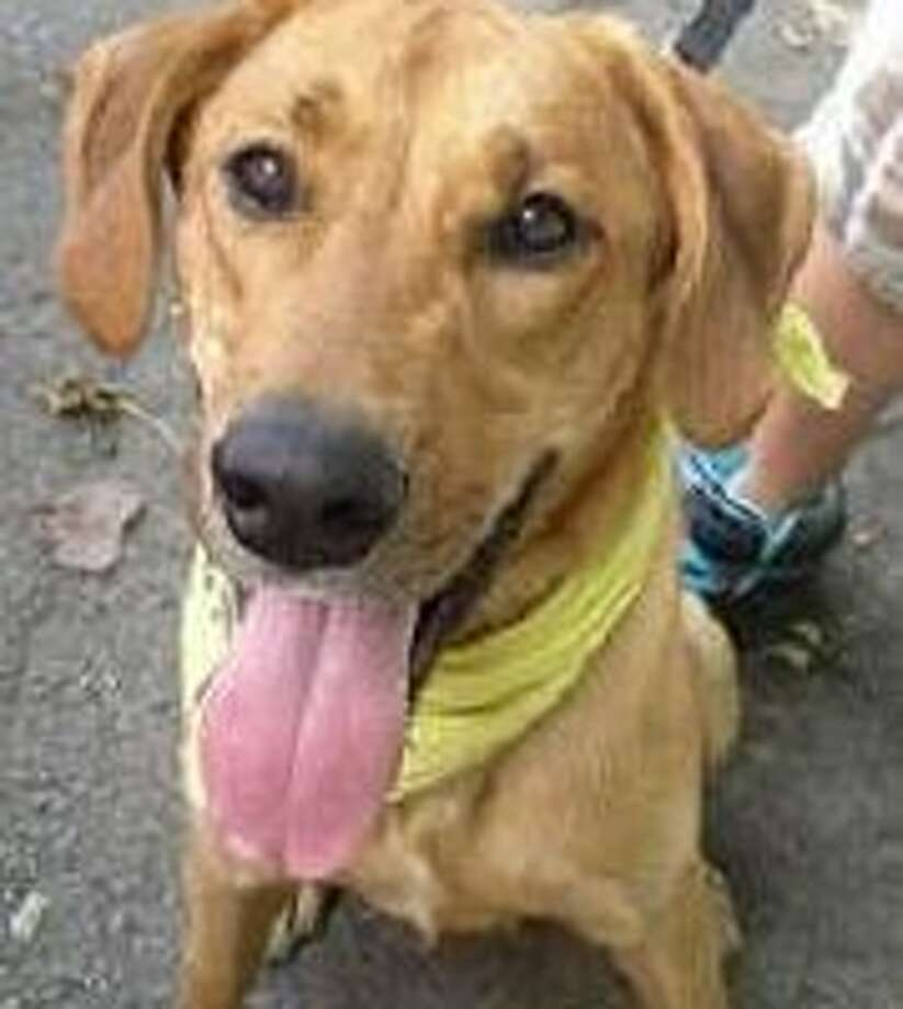 Ben is a young, enthusiastic pooch who just loves to be outside running and playing. He is friendly, affectionate and believes himself to be a small lap dog. (Jill Perkins)