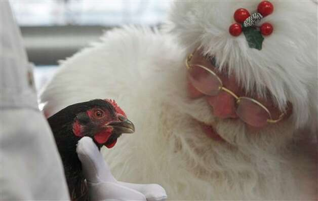 "Brady White, portraying Santa Claus, looks at a live chicken as part of the ""Daytrip to Stone Barns Farms"" gift presentation during the unveiling of the Neiman Marcus Christmas catalog in Dallas, Tuesday, Oct. 18, 2011. The daytrip to the picturesque farm in the countryside of Pocantico Hills, N.Y., costs $9,500. Photo: Associated Press"