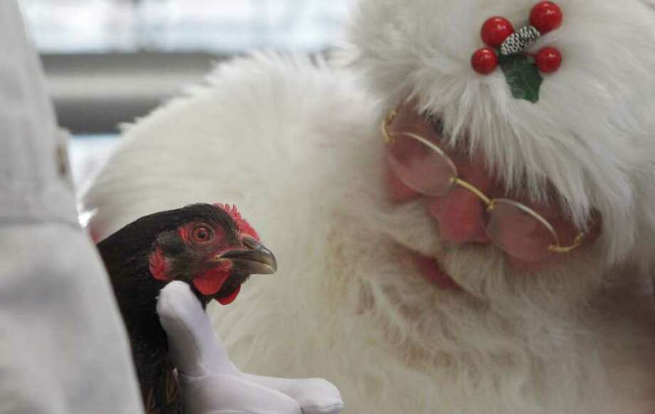 "Brady White, portraying Santa Claus, looks at a live chicken as part of the ""Daytrip to Stone Barns Farms"" gift presentation during the unveiling of the Neiman Marcus Christmas catalog in Dallas, Tuesday, Oct. 18, 2011. The daytrip to the picturesque farm in the countryside of Pocantico Hills, N.Y., costs $9,500. Photo: LM Otero, AP / AP"
