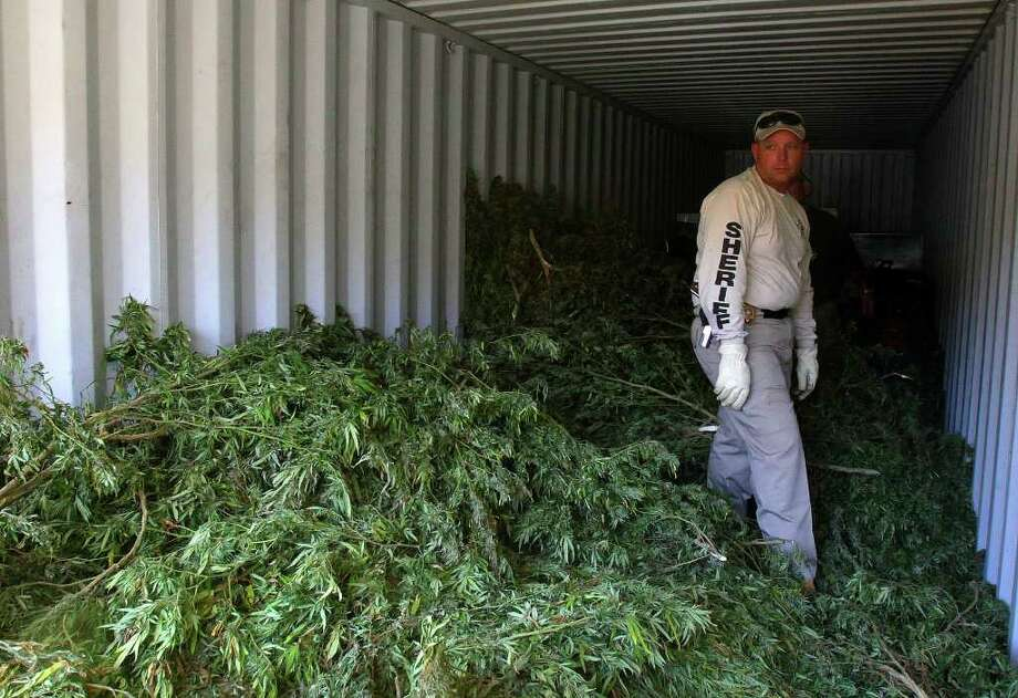 CODY DUTY : CHRONICLE POT HAUL: Liberty County Sheriff's Office Capt. Rex Evans said officers pulled up 6,000 stalks of marijuana worth an estimated $4 million from a field in the county. Photo: Cody Duty / © 2011 Houston Chronicle
