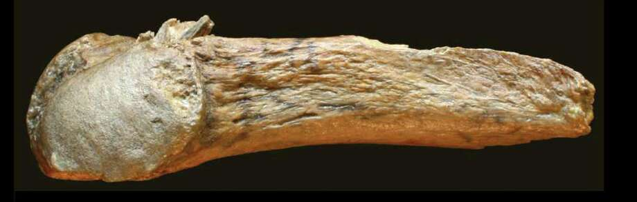 Photo of the rib with the bone point embedded in it. / Center for the Study of the Firs