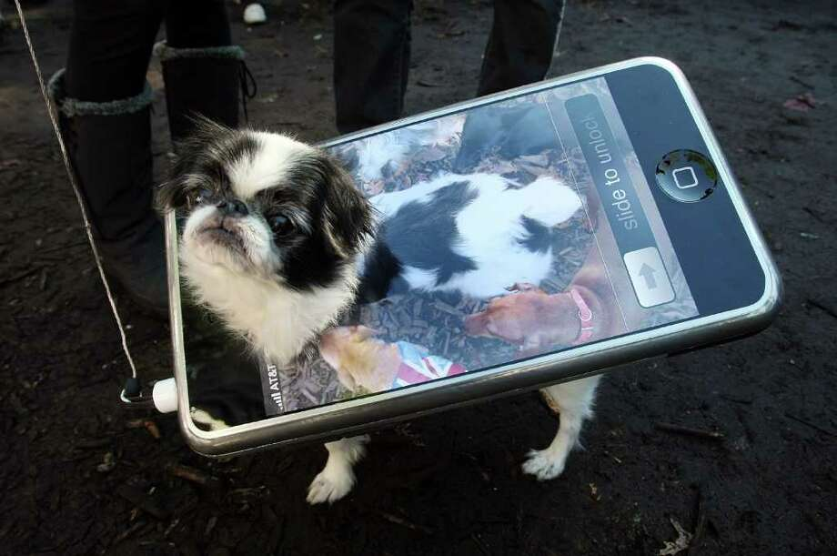 NEW YORK - OCTOBER 28:  Bon the dog poses as an iPhone during the 17th annual Tompkins Square Halloween Dog Parade October 28, 2007 in New York City. The event is the largest dog Halloween party in the United States with an annual attendance of over 400 costumed dogs. Photo: Mario Tama, Getty Images / 2007 Getty Images