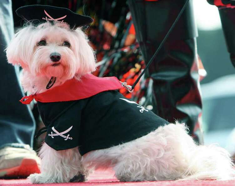 A dog named O.J. wears a pirate outfit, during a doggy costume contest in West Hollywood, California