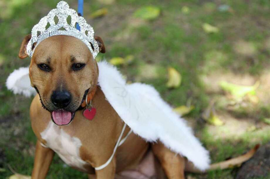Lady is dressed like a princess, during a doggy costume contest in West Hollywood, California, 28 October 2007. AFP PHOTO GABRIEL BOUYS Photo: GABRIEL BOUYS, AFP/Getty Images / 2007 AFP