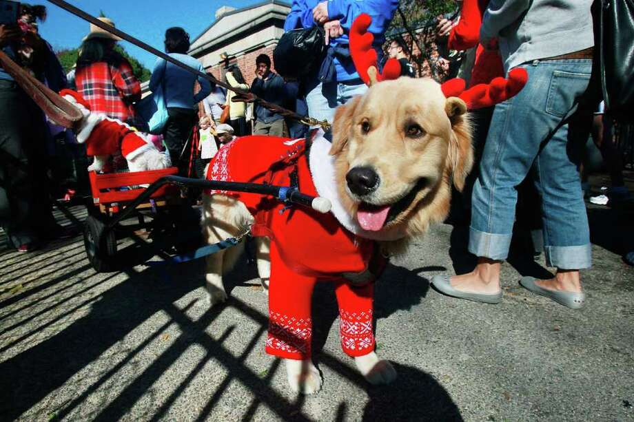 NEW YORK - OCTOBER 26:  Dog Harley is dressed as a reindeer during the 18th annual Tompkins Square Halloween Dog Parade October 26, 2008 in New York City. The event is the largest dog Halloween party in the United States with an annual attendance of over 400 costumed dogs. Photo: Mario Tama, Getty Images / 2008 Getty Images