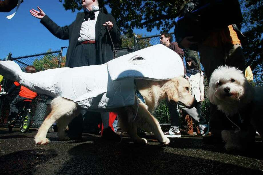 NEW YORK - OCTOBER 26:  Dog Phoenix is dressed as Moby Dick during the 18th annual Tompkins Square Halloween Dog Parade October 26, 2008 in New York City. The event is the largest dog Halloween party in the United States with an annual attendance of over 400 costumed dogs. Photo: Mario Tama, Getty Images / 2008 Getty Images