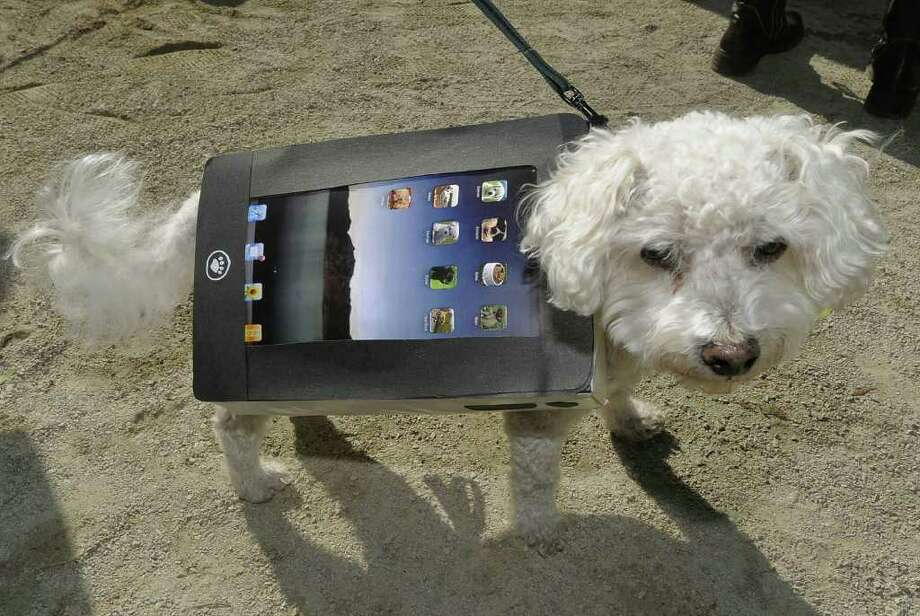Oscar the Bichon impersonates an iPad during the Tompkins Square Park 20th Annual Halloween Dog Parade October 23, 2010 in New York City. AFP PHOTO/TIMOTHY A. CLARY Photo: TIMOTHY A. CLARY, AFP/Getty Images / 2010 AFP