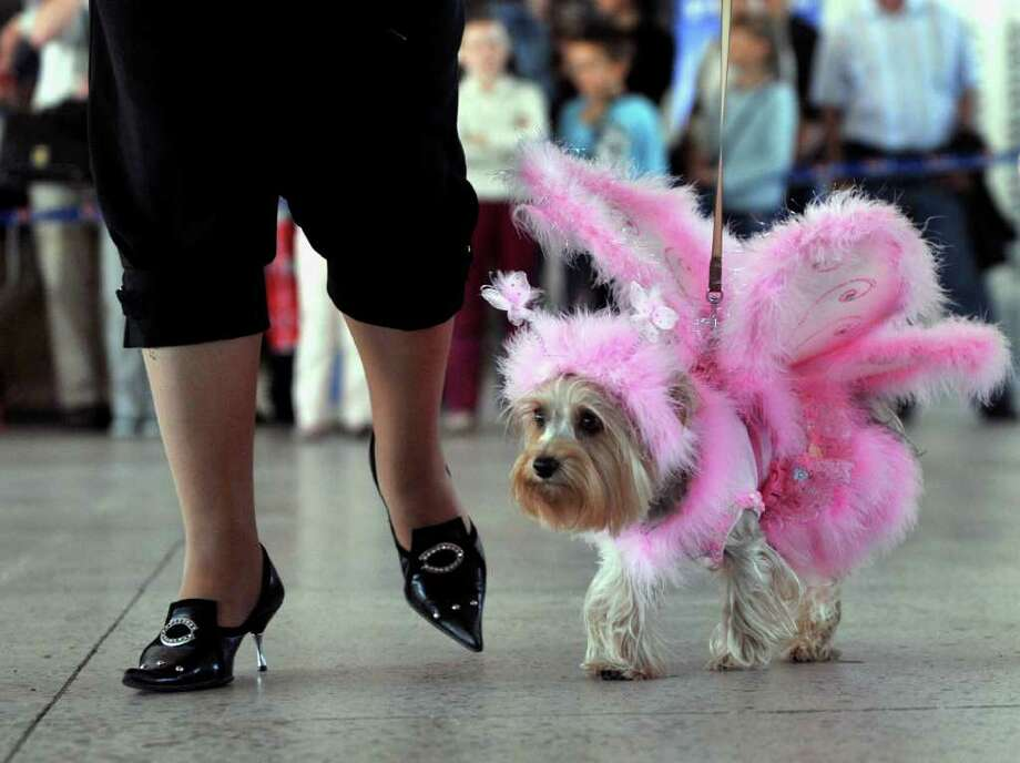 A woman walks her dog, dressed up in an outfit during an international dog show in Minsk on June 5, 2010. AFP PHOTO / VIKTOR DRACHEV Photo: VICTOR DRACHEV, AFP/Getty Images / 2010 AFP