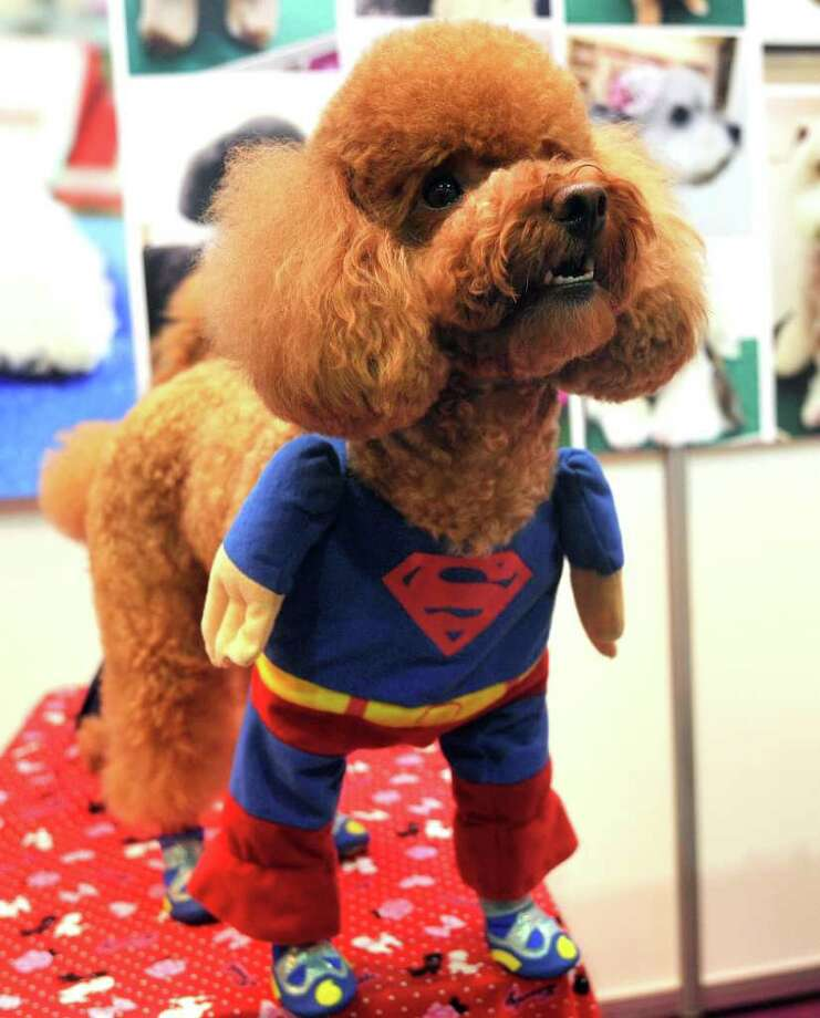 A dog is dressed in a superman costume at a pet trade fair in Taipei on July 15, 2011.  More than 200 companies are participating in the fair as Taiwan's booming pet retail market is estimated to worth $689 million, organisers said. AFP PHOTO/PATRICK LIN Photo: PATRICK LIN, AFP/Getty Images / 2011 AFP
