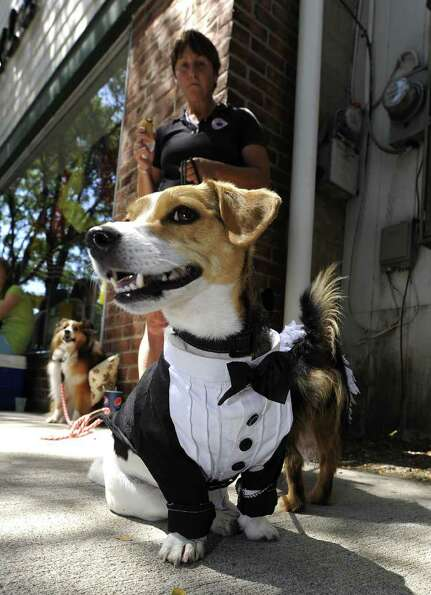 A woman walks her dogs dressed in bride and groom costumes on July 31, 2010 in the  town of Rhinebec