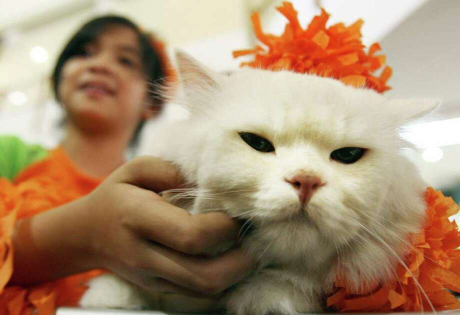 JAKARTA, INDONESIA: A cat dressed up in costume poses for a photo during a cat show inside a shopping centre in Jakarta, 01 April 2007. The event was part of a larger flora and fauna show in which hundreds of people took part.   AFP PHOTO/AHMAD ZAMRONI Photo: AHMAD ZAMRONI, AFP/Getty Images / 2007 AFP
