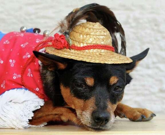 Sheih.  Модельер нарядила собачек в баварские дирндлы.