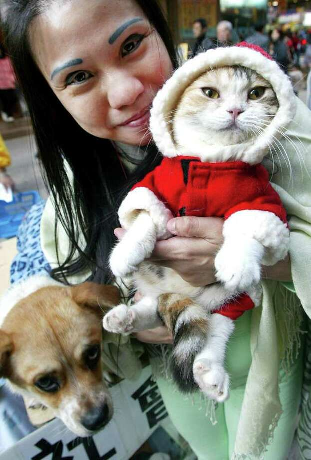HONG KONG, CHINA:  Jackie Chan, President of the Lok Hong association holds up a cat dressed in a Santa costume at a fundraising in Hong Kong 09 December 2002. The association which saves stray animals and uses them for animal therapy for the elderly and handicapped is urging the public not to give animals for Christmas. AFP PHOTO/Peter PARKS Photo: PETER PARKS, AFP/Getty Images / AFP