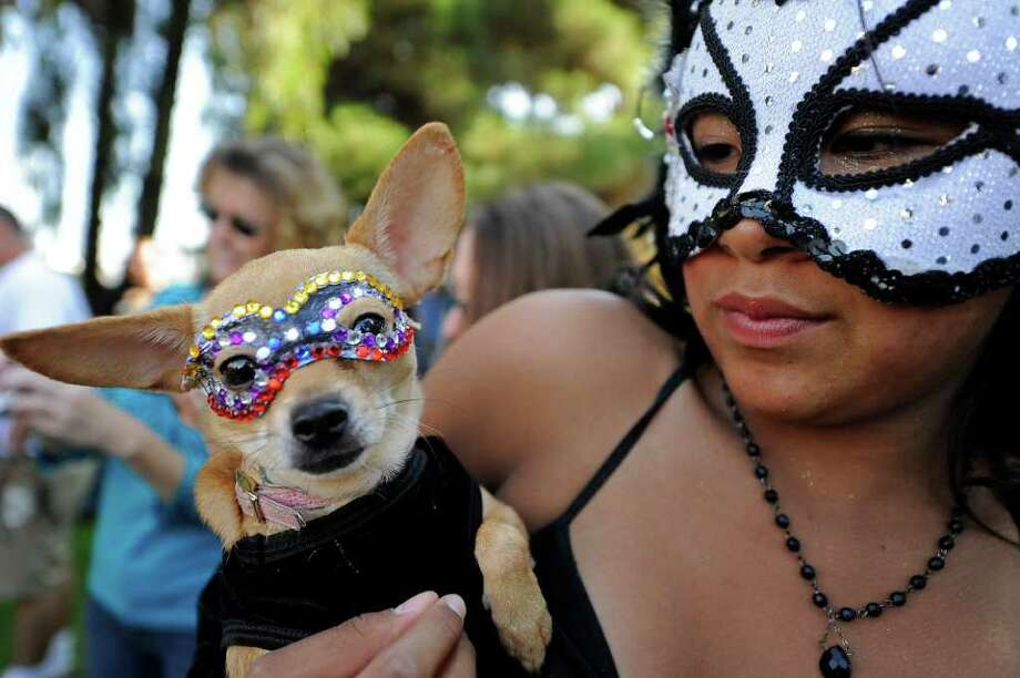 "Brittany Ching holds her Chihuahua ""Tiki"" at the Halloween Dog Costume Parade in Long Beach, California on October 31, 2010.   AFP PHOTO / Robyn Beck Photo: ROBYN BECK, AFP/Getty Images / 2010 AFP"