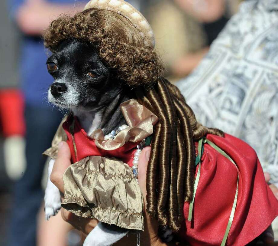 "A dog dressed as a ""noble woman"" marches in the Halloween Dog Costume Parade in Long Beach, California on October 31, 2010.   AFP PHOTO / Robyn Beck Photo: ROBYN BECK, AFP/Getty Images / 2010 AFP"
