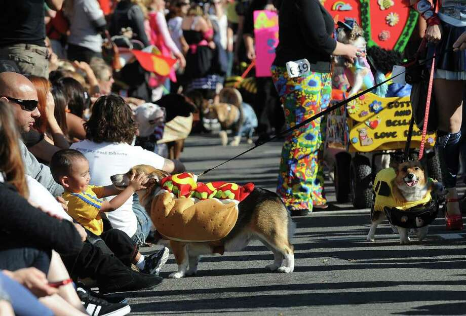 A dog dressed as a hot dog stops to greet a spectator while marching in the Halloween Dog Costume Parade in Long Beach, California on October 31, 2010.   AFP PHOTO / Robyn Beck Photo: ROBYN BECK, AFP/Getty Images / 2010 AFP