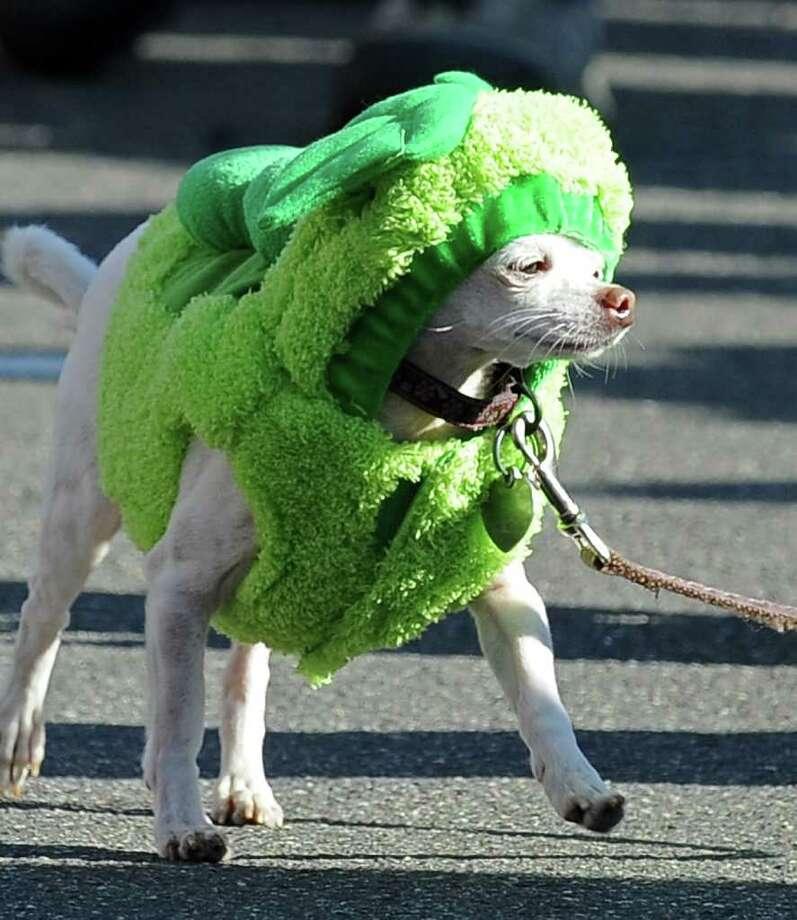 A dog marches in the Halloween Dog Costume Parade in Long Beach, California on October 31, 2010.   AFP PHOTO / Robyn Beck Photo: ROBYN BECK, AFP/Getty Images / 2010 AFP