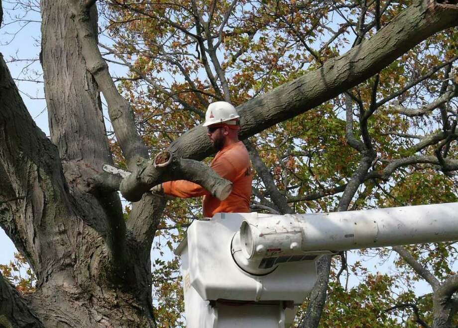 Bill Danstaedt from Asplundh Tree Co. takes down a sugar maple on Sherman Green Monday. Photo: Genevieve Reilly / Fairfield Citizen