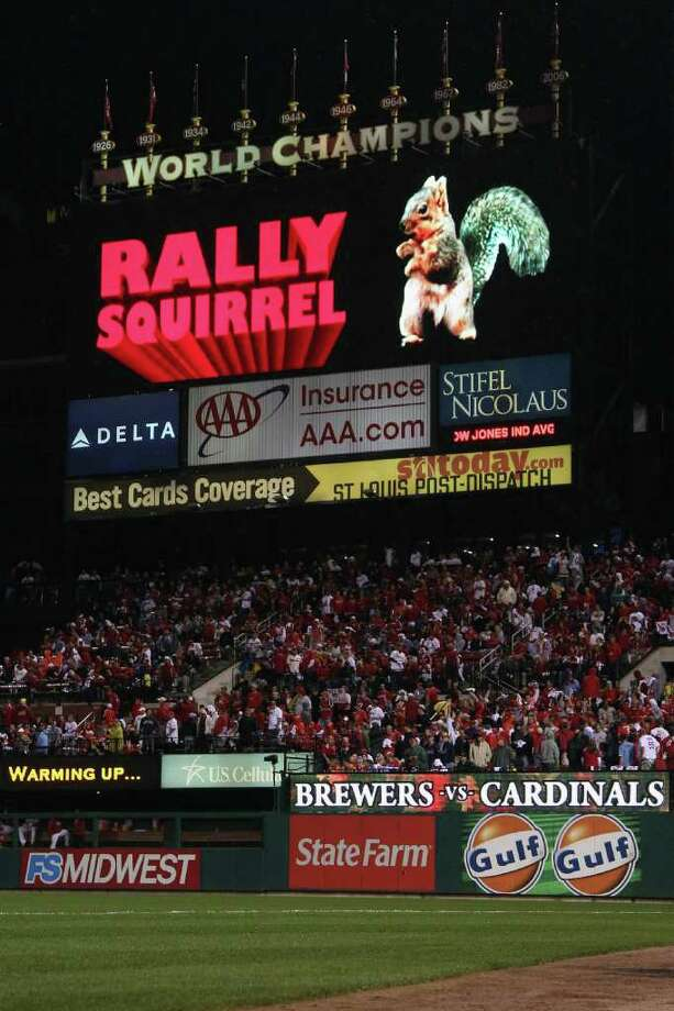 The Rally Squirrel - The Midwest's new furry friend 