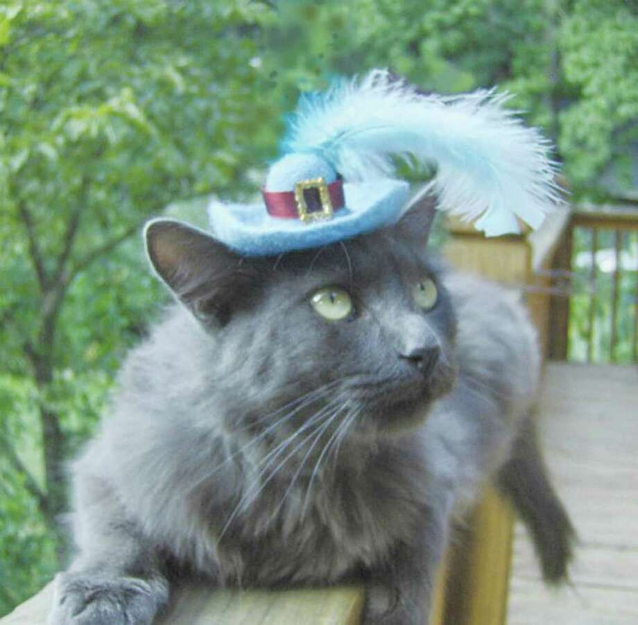 If your cat isn't in the mood to wear a full-fledged costume, try a fanciful hat and hope for the best. Photo: SCOTT ROGERS, THE GAINSVILLE TIMES / The Times