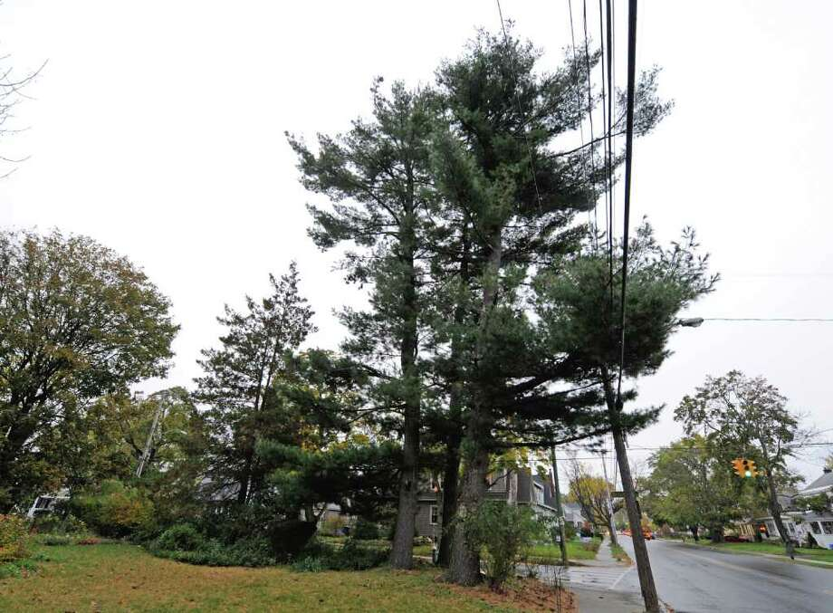 The cluster of trees on Lyn Hohmann's property at the corner of Edgecomb and Whitehall Road in Albany, N.Y. October 26, 2011.  (Skip Dickstein/Times Union) Photo: Skip Dickstein / 2011