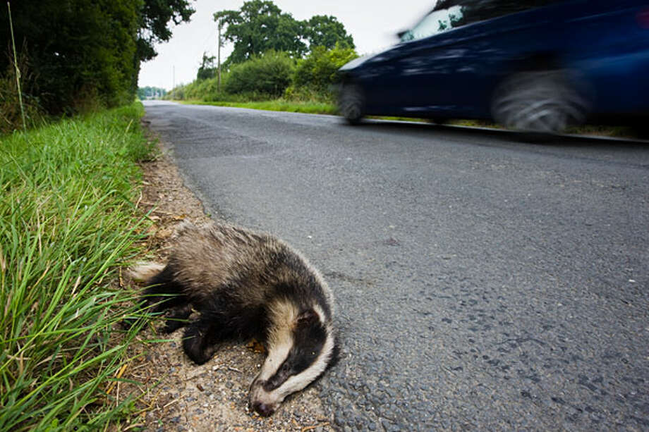 Road Kill Removal SpecialistAverage Salary: $30,000 Even the most careful and diligent motorist is not immune to the occasional accident. Sadly, sometimes that accident is a high-velocity encounter with an errant animal that wandered onto the road. For many motorists unfortunate enough to experience this, the feelings of sadness and guilt can be overwhelming. Not so overwhelming, however, that they'll actually remove the unfortunate animal from the road and clean the spot where it met its maker. This is where the road kill removal specialist enters the picture. He or she removes the unlucky varmint from the road, cleans the affected patch of asphalt and disposes of the remains in a tidy fashion. In doing so, they keep the highway clear and spare motorists a gruesome sight on their daily commutes. The specialist earns an average annual salary of $30,000, according to CareerCast.com.Other popular stories on CNBC.com: 