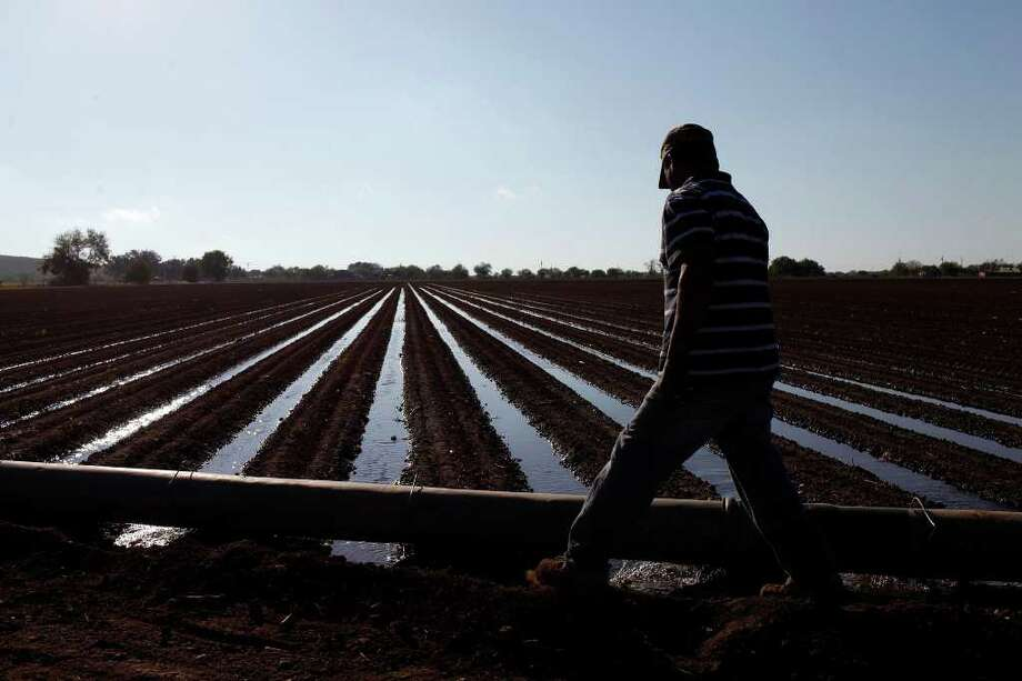 Irrigator Alejandro Alvarez checks to make sure the water is running efficiently for a crop of onions planted in the last week at the Smith Farm, southeast of Ulvade, on Wednesday, Oct. 26, 2011. LISA KRANTZ/lkrantz@express-news.net Photo: LISA KRANTZ, SAN ANTONIO EXPRESS-NEWS / SAN ANTONIO EXPRESS-NEWS