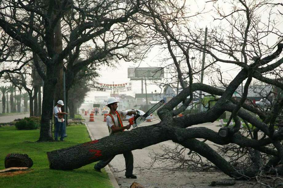 MICHAEL PAULSEN : CHRONICLE TIMBER: Damian Truxillo trims one of the historic oak trees on the Broadway Street esplanade in Galveston after Hurricane Ike made landfall in 2008. All but a few of the many oak trees planted after the 1900 storm were killed by inflows of salt water. Photo: Michael Paulsen / Houston Chronicle