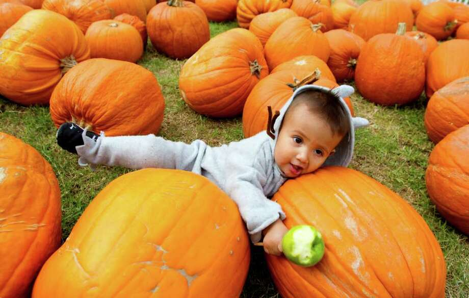 "Gabriel Huerta, 17 months, dressed as Max from Where the Wild Things Are, plays in a pumpkin patch at St. Luke's United Methodist Church Friday, Oct. 28, 2011, in Houston. ""We were driving by and saw the pumpkin patch,"" his mom Andrea Huerta said. ""We stopped because he's never been to one before."" Photo: Cody Duty, Houston Chronicle / © 2011 Houston Chronicle"